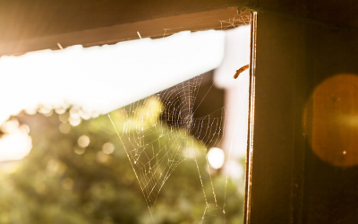 What To Do About Webs